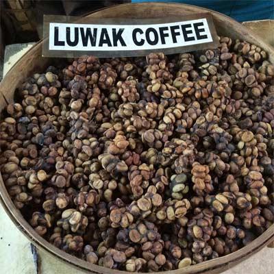 Café Luwak balines